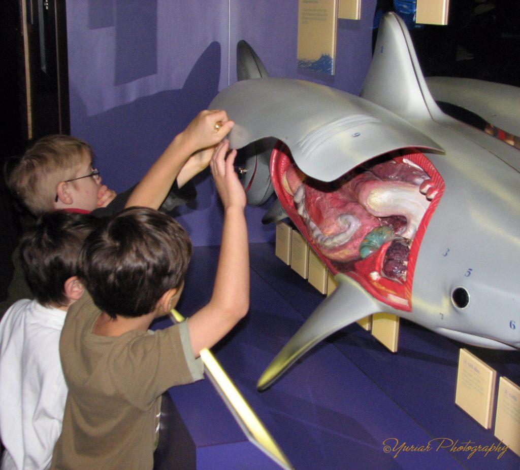Gross! Shark Guts!